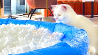 Do Cats Like Packing Peanuts?   Compilation