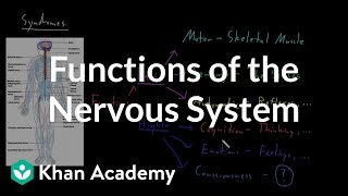 Functions of the nervous system | Organ Systems | MCAT | Khan Academy