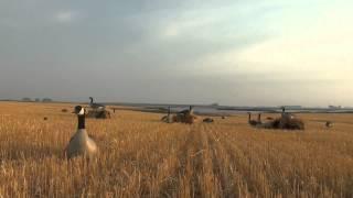 Goose Hunting - North Dakota