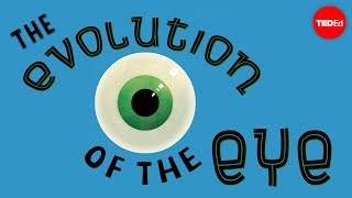 The evolution of the human eye - Joshua Harvey