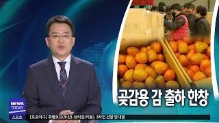 [대구MBC뉴스] 곶감용 감 출하 한창...생산량 줄 …