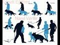 Köpek Eğitimleri Köpeğinize İtaat Eğitimi Nasıl Verilir 3 mp3