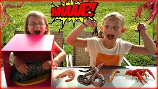 Video WHAT'S IN THE BOX CHALLENGE - Magic Box Toys Collector download MP3, 3GP, MP4, WEBM, AVI, FLV Oktober 2017
