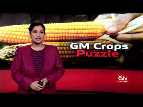 In Depth : GM Crops Puzzle
