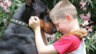 Doberman Dog Protecting Babies and Kids Compilation 2018   NEW HD