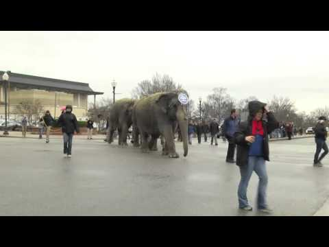 RAW: The circus is in town!!