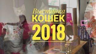 Выставка кошек в МВЦ, г. Киев. 19 мая 2018. Cats Show