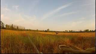 Hunting Michigan 9.1.2012 Goose hunting opener
