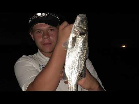 Beach Fishing|Bass Love Squid