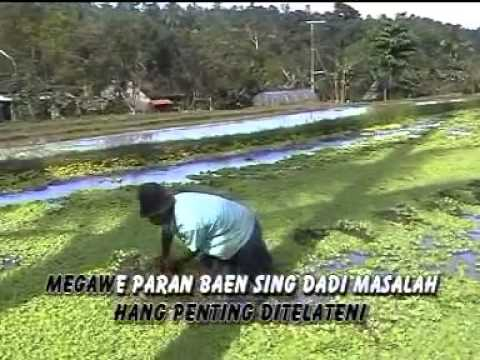 Catur Arum  Adistya - Tandang Gawe