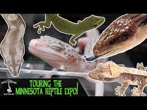 TOURING THE MINNESOTA REPTILE EXPO! (June 2018) - YouTube