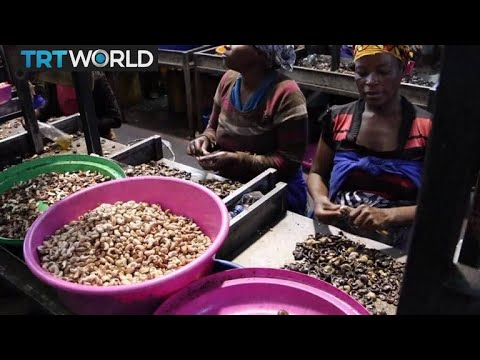 Mozambique Nut Industry: Cashew crop makes a comeback after civil war
