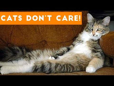 Cats Don't Care Cute Animal Compilation |  Funny Pets Videos 2017