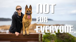 5 things I learned owning a German Shepherd | Puppy biting, diet, vet bills, training, and working