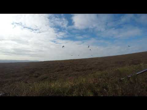Driven Grouse Shooting 2017 - Muirburn Sporting