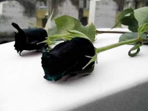 Mis Flores Negras De Julio Florez Youtube