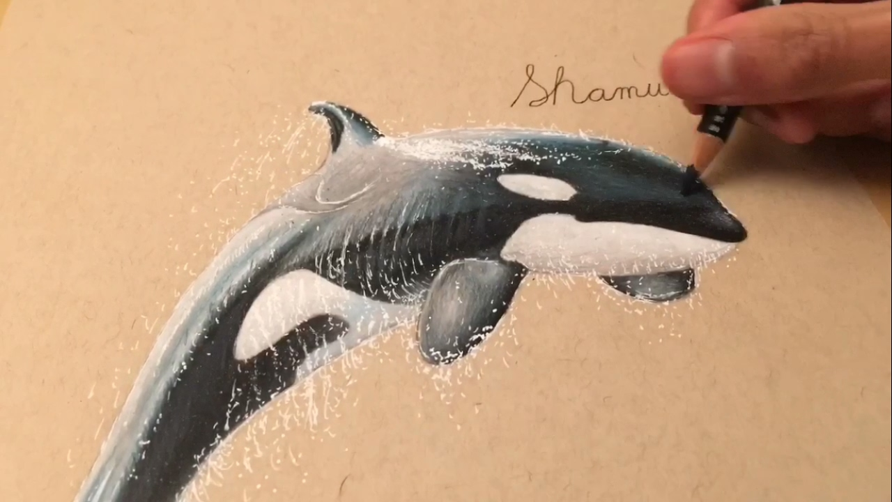 shamu drawing time lapse youtube