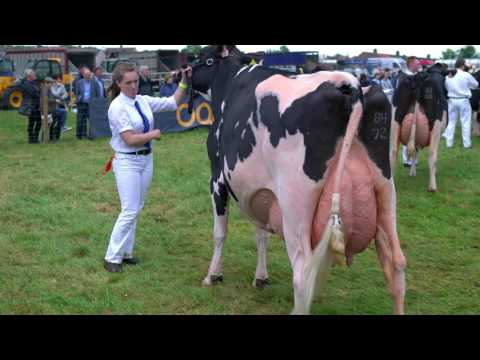 2017 Ayr Show.Holstein Championship.Boclair Gold Barbara 2. 4K Video