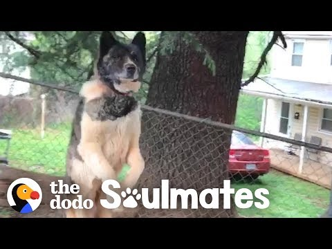 The Wake Up Show - Woman Who Visited & Fed Chained Up Dog For A Year Finally Gets To Adopt Her