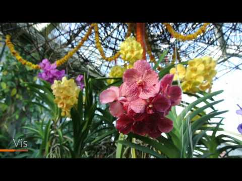 Kew Gardens Orchid Festival 2017