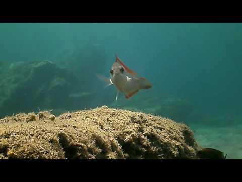 Scuba Diving Plakias Kalypso Damnoni Area South Crete Greece 2016 March April May