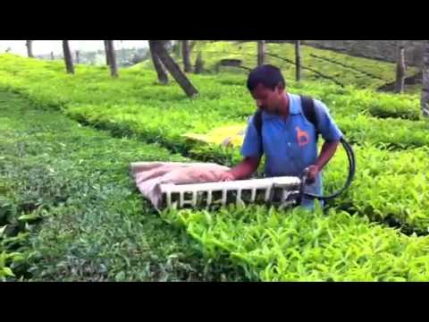 Tea harvester or plucking machine in the Nilgiri hills - by Priya Traders