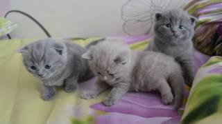 Дневник котят #2 | День 16 - Котята никому не нужны?