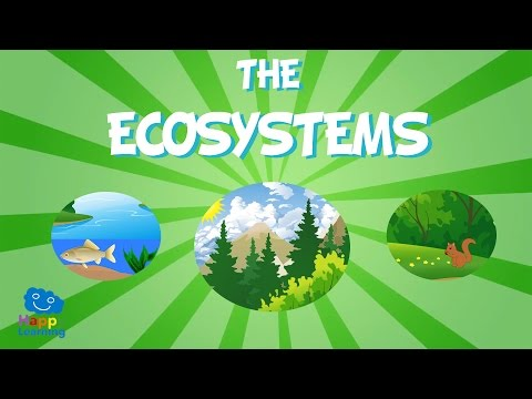 The Ecosystem | Educational Video for Kids