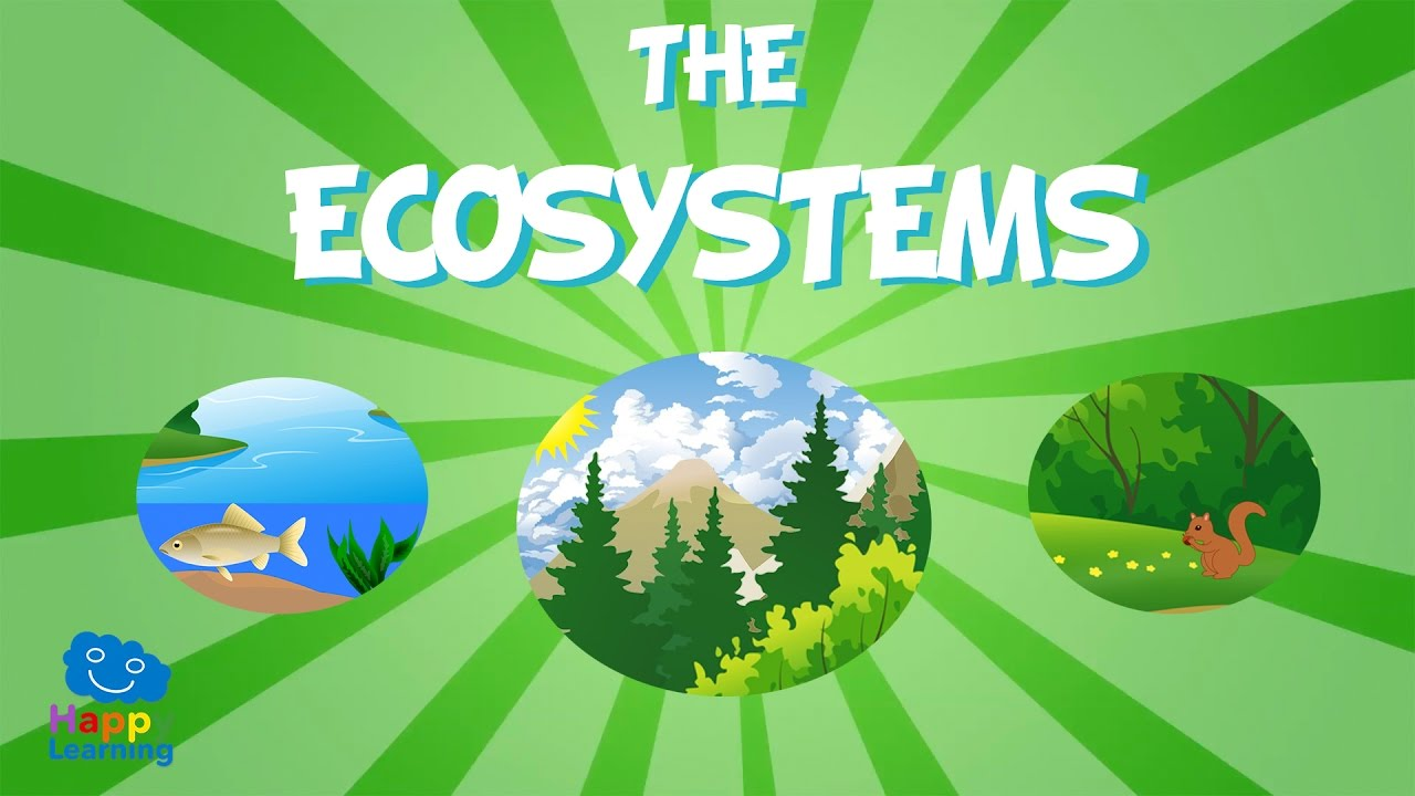 The Ecosystem | Educational Vi...
