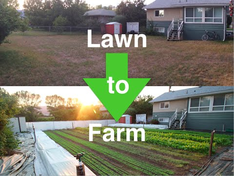 How I convert lawns into profitable URBAN FARMS!