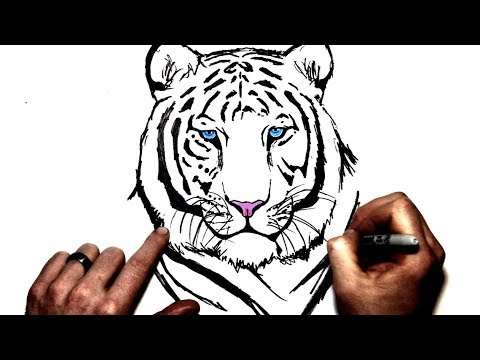 How to Draw a White Tiger | Step By Step - YouTube