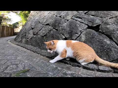 尾道、朝の猫探し散歩