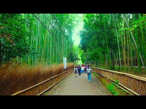 Kyoto Walk - Explore around Arashiyama, Arashiyama Bamboo Forest (嵐山 - 竹林) - 4K