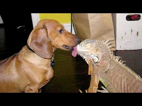 DOGS trying to KISS EVERYTHING are so FUNNY! – PREPARE to LAUGH!
