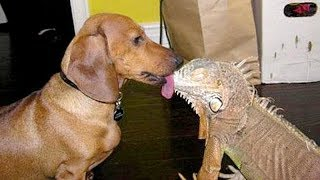 DOGS trying to KISS EVERYTHING are so FUNNY! - PREPARE to LAUGH!