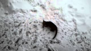 Captain Kringel - Katze spielt mit Maus im Schnee