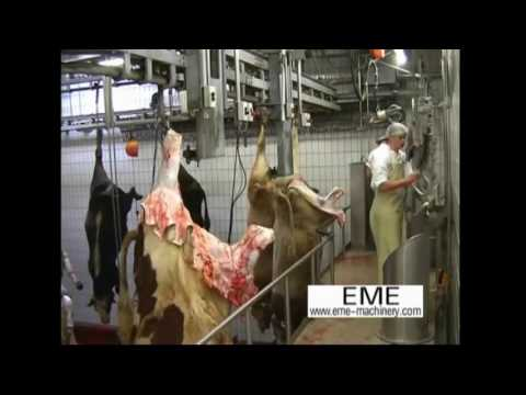 EME abattoir cattle slaughter line equipment video