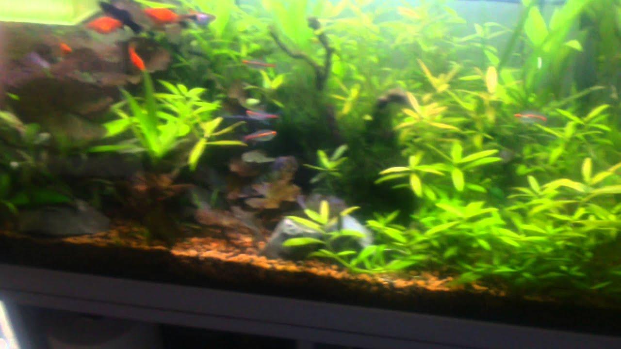 Aquarium D Eau Douce Eclairage A Led Marin Youtube