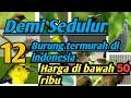 Harga Burung Termurah Di Indonesia  Mp3 - Mp4 Download