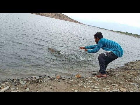 Fish Hunting  Big Rohu Fish