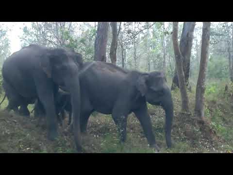 wayanad elephant attack