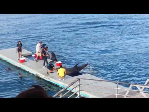 SUBIC DAY 2: OCEAN ADVENTURE!! - Jan. 02, 2017