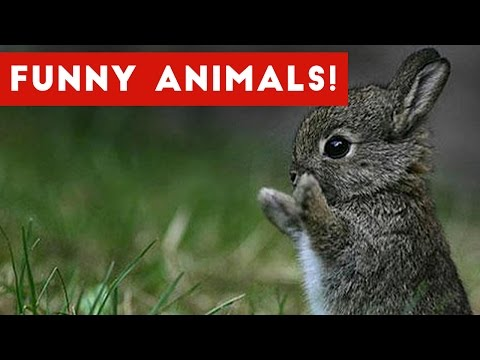 Thumbnail: Funny Animal Clips, Bloopers, Outtakes & Moments Weekly Compilation 2016 | Funny Pet Videos