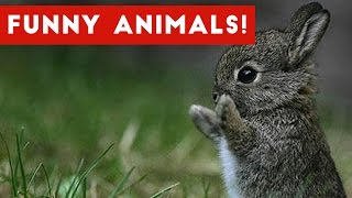 Funny Animal Clips, Bloopers, Outtakes & Moments Weekly Compilation 2016 | Funny Pet Videos