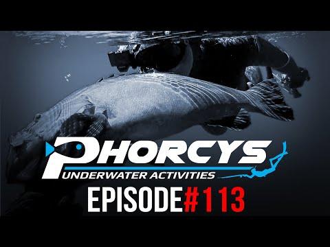 PHORCYS Spearfishing Worldwide Videos #113 - Underwater Activities 2019