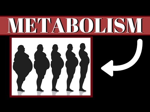 Is Obesity Caused By Slow Metabolism? The TRUTH