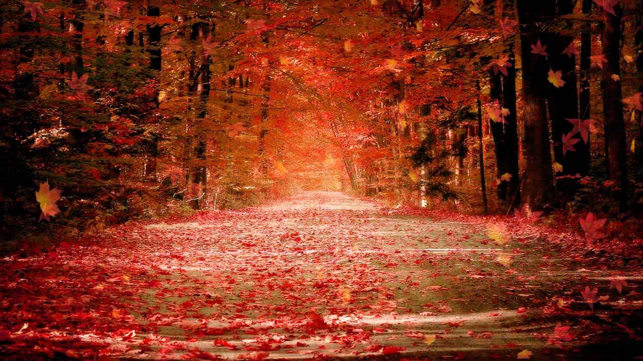 Autumn Dream Animated Wallpaper - YouTube