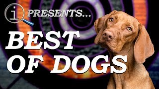 QI Compilation | Best Of Dogs