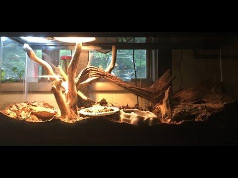 Bioactive Terrarium For A Green Iguana!!!
