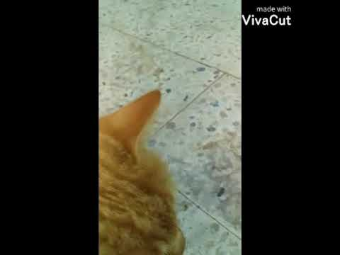 #cat_baby/Cat VS dog the cute couple more days
